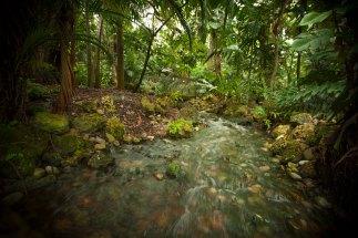 Florida's Rainforest